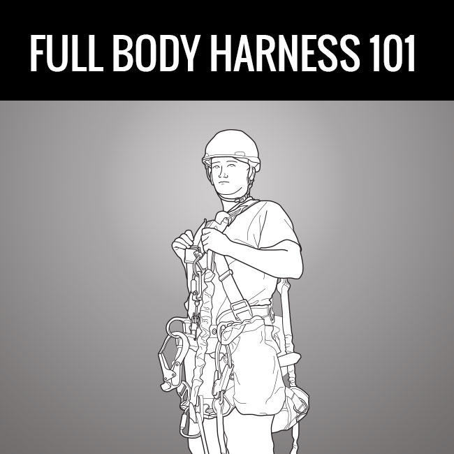 Full Body Harness 101